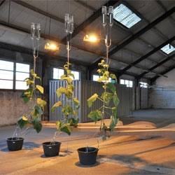 "Parthenocarp installation from Ronald van der Meijs. Interesting project with tones created by strings controlled by growing cucumber plants. The cucumbers form a ""slow driving piston"", guiding a mechanical 'finger' along the string as they grow."