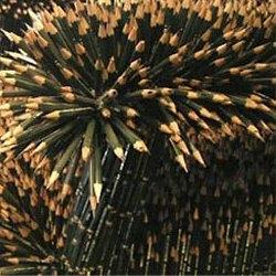 Prickly pencil furniture