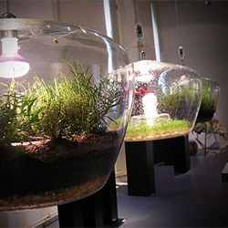 Pendant glass light/ terrarium shown at the glass design studio of the Academy of Arts, Architecture and Design in Prague