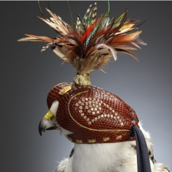 Diamond studded falcon hoods