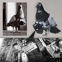 in 1908 Dr Julius Neubronner patented a miniature pigeon camera activated by a timing mechanism. Amazing pictures found at The Public Domain Review.