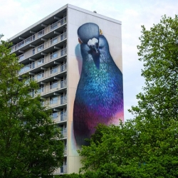Giant pigeon street art from Super A.