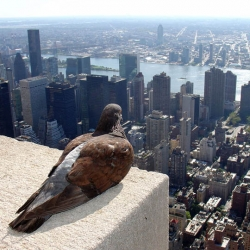 Amazing photos from Finnish photographer ZeroOne of pigeons atop of the Empire State Building.