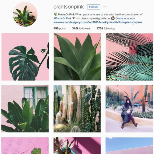 PlantsOnPink on Instagram - plants are taking over the design world, and there's something mesmerizing about these pink/plant combos that you'll start spotting all over after scrolling through this feed.