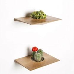 Domenic Fiorello Studio Plant Pod made of White Oak