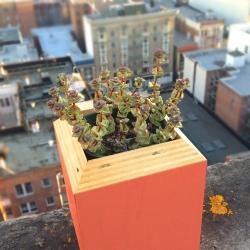 Plywood planter by San Francisco designer Rachel Gant.
