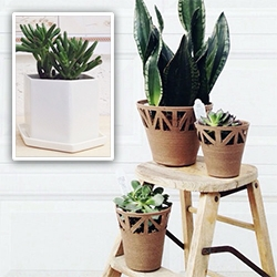 Convivial Production out of Kansas City has interesting pots and planters with cut outs as well as hexagonal planters.