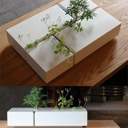 """Interior Weeds"" by Dutch designer, Arwin Caljouw, ""...with the center piece you can create an interior plantation from street weeds or other personal selection of plants."""