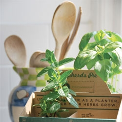 Sam Steven's food packaging design that doubles as a planter for herbs.