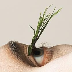 Mary Graham's Natural project imagines plants as fake eyelashes