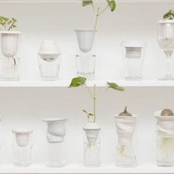 PLANTACJA (The Plantation) by Alicja Patanowska - upcycles found glasses by adding in hand thrown porcelain pieces to grow plants and observe root growth.