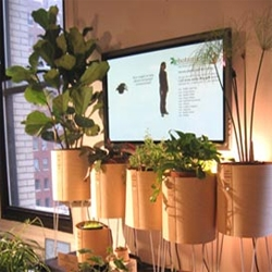 Robert Faludi, Kate Hartman, Kati London and Rebecca Bray of NYU's ITP program have created 'Botanicalls'  to let thirsty plants communicate their needs to humans - by placing phone calls to their owners.