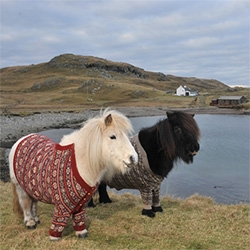 Shetland Ponies in Cardigans! Visit Scotland is having fun with this campaign.