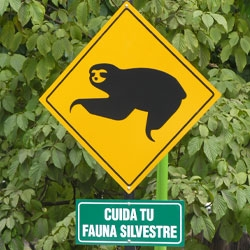 Designer in Caracas made the Baruta Council signs for sloth crossing.