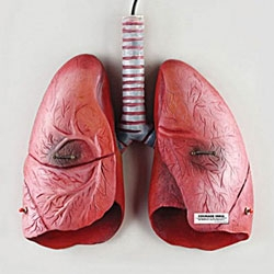 Light up your lungs by Courage Índia.