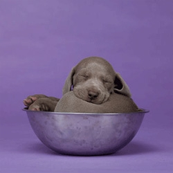 William Wegman does his first ever animated gif...