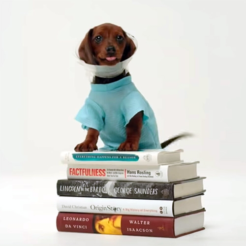 "Bill Gates ""5 books worth reading this summer"" - a fascinating list (I'm so curious about Factfulness!) and the video is adorable and filled with puppies!"