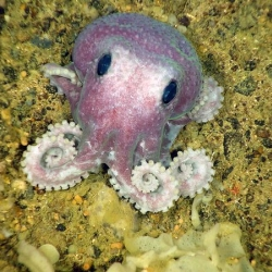 National Geographic has made a list of the Ten Weirdest New Animals of 2010. This unidentified purple octopus is one of 11 potentially new species found during a July deep-sea expedition off Canada's Atlantic coast.