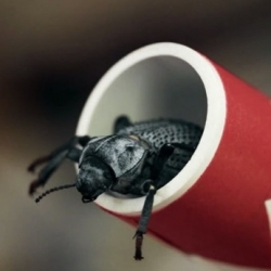 Qualcomm: Check out the world's first 100 percent insect-powered smartphone.