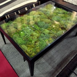 Ayodhya's moss tables add a micro-landscape to your living room! Part of the Secret Garden collection shown at the IFFS  - international furniture fair in Singapore 2010.