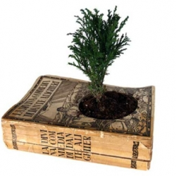 A clever way to combine literature and plants from Gartenkultur, by using an old book as a planter. Perhaps a book on the desert paired with a cactus, or asian philosophy with a bonsai?