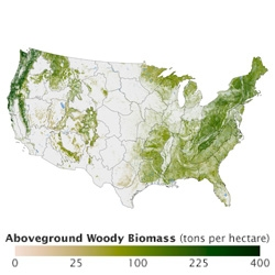 This amazing NASA map shows tree density in the United States.