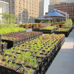 Core77 visits Riverpark Farms, Manhattan's newest example of urban agriculture.