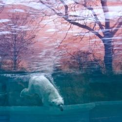 Sabrina Jung's photography - quiet and beautiful.