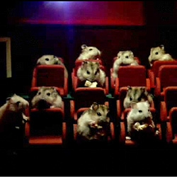 Alternatives uses for a small screen. A new Samsung viral: 38 Cute Animals, 1 Screen, 8 Different Uses.