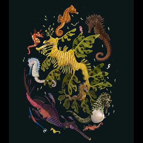 """""""Syngnathidae"""" print by Zoe Keller for Pangea Seed Foundation. Another stunning print by one of our favorite artists, for one of our favorite groups! Look at the detail! Those baby seahorses!!!"""