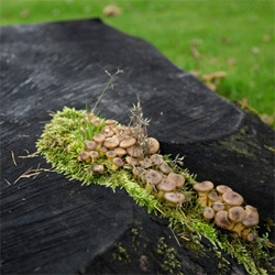 Inspiration: Shrooms! There's something so awesome about mushrooms growing in the woods, on moss, off trees...