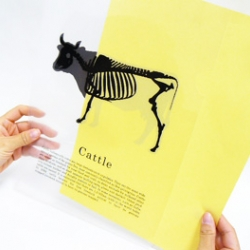 Silhouette File produced by Plastic Art are unique and fun document folders.. Sweet animals change into skeletons when paper is put inside.