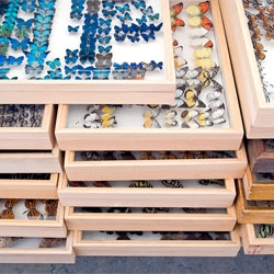 Klaus Pichler's Skeletons in the closet series captures museum specimens off display.