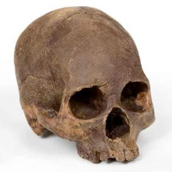 A 100% edible chocolate skull cast from an actual human skull by Marina Malvada.
