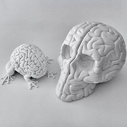 Emilio Garcia's Skull Brain (the brainy follow up to the Jumping Brain!) ~ see the making of in this flickr set.