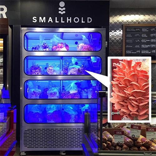 Smallhold - mushroom minifarms that you can pop up just about anywhere... in supermarkets, restaurants, and more!