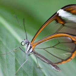 """Amazing Butterflies is the summer """"exhibition"""" at the Natural History Museum in London. The butterflies (and moths) fly around you and sit on your shoulder as you walk around. Open for one more week only!"""