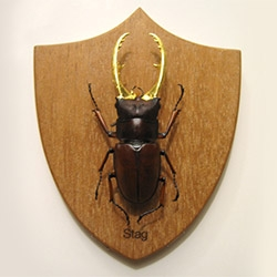 'Big Game' - a set of gold leafed insects inspired by traditional big game taxidermy and insect specimen preparation. By Scot Bailey.
