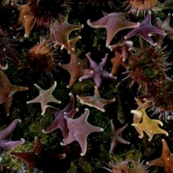 Deep under the Antarctic ice, a rare, colourful burst of starfish and 3m-long monster worms has been filmed by a BBC camera crew. Incredible footage!