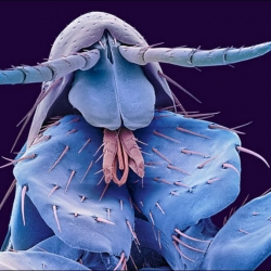 Microscopic Insect Photography by Steve Gschmeissner.