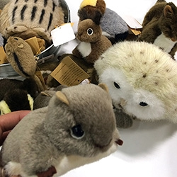 "Yamanekobo ""Message From Field"" high quality stuffed woodland animals that are made in Japan since 1985. (See the japanese site for even more pics and products) Love the squirrel, flying squirrel, and ducklings!"