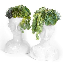 Succulent heads over at Oh Joy!