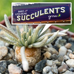Grow Nursery: Rare & Unusual Succulents ~ a peek into the incredible store of succulents and air plants in Cambria, CA.