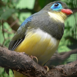 The Trogon - a little know family of birds.  They are beautiful, diverse and colorful.  All in all they are some bird!