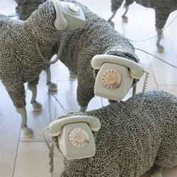 Telephone Sheep?