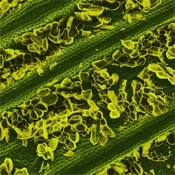 Caren Alpert's Terra Cibus captures exotic landscapes within food with the help of a scanning electron microscope.
