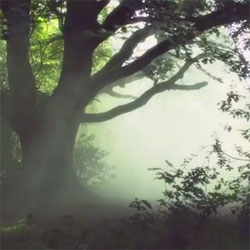 The beautiful forest. Beautiful short film from the WWF.