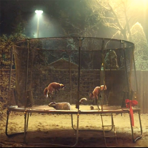 John Lewis #BusterTheBoxer holiday advert. Who doesn't love animals... jumping on trampolines?!?!?!