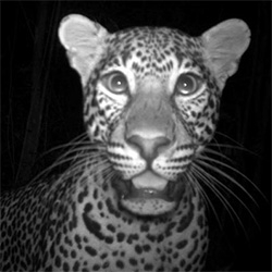 Best Camera Trap Animal Photos of 2012 on NatGeo