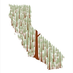 Aruppel's adorable tree prints of various states ~ here's the California Redwood edition ~ Wisconsin, Washington, Michigan, and Oregon too.